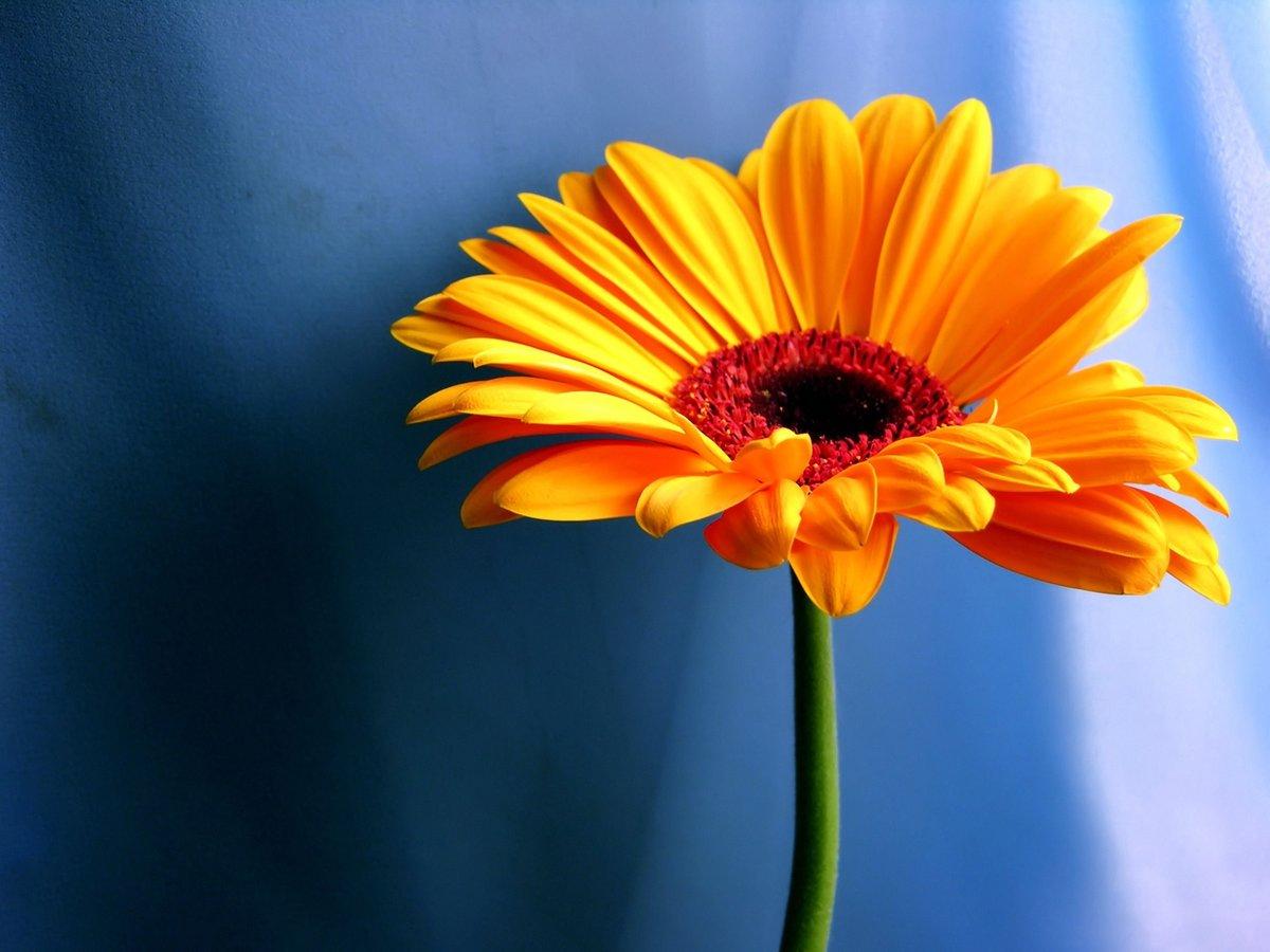 Аватарки красивые с цветами, поздравления