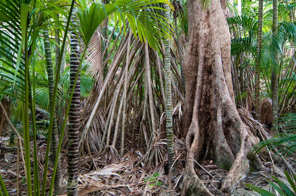 производится картинка тропического дерева переживают
