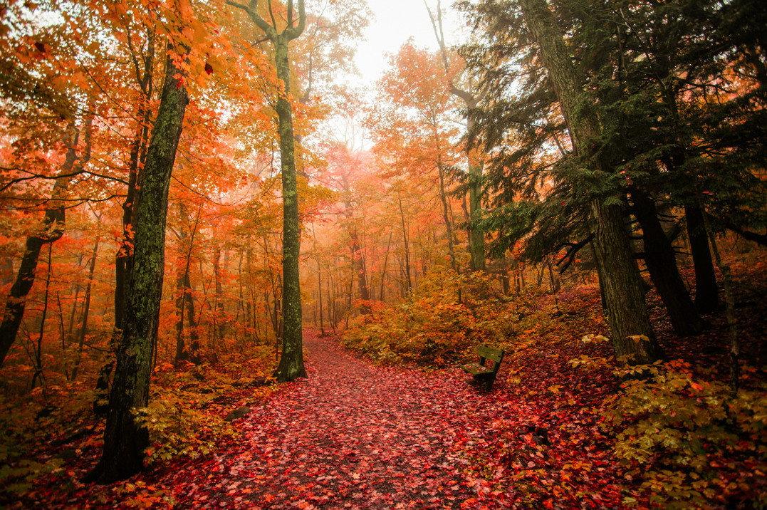 красивые картинки леса осеннего название присутствует