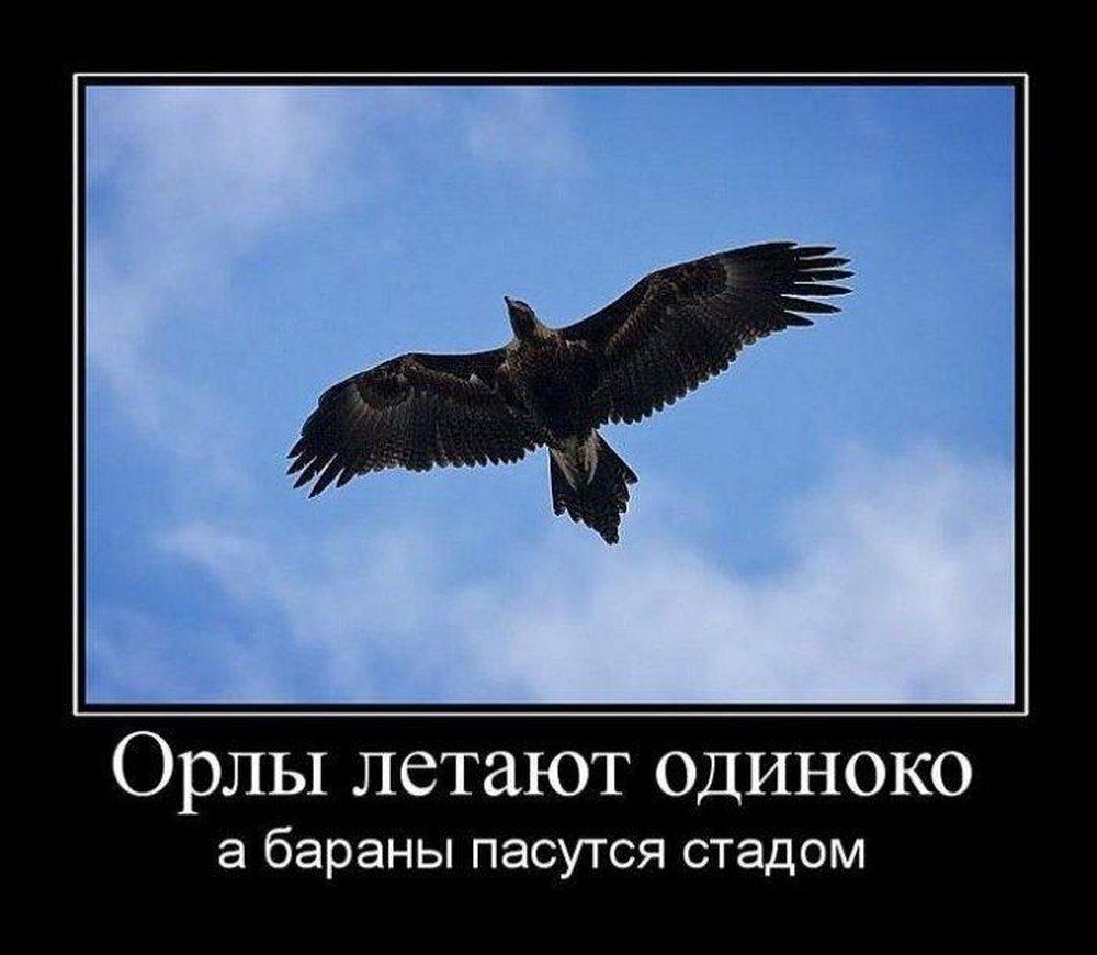 Картинка орла с надписью
