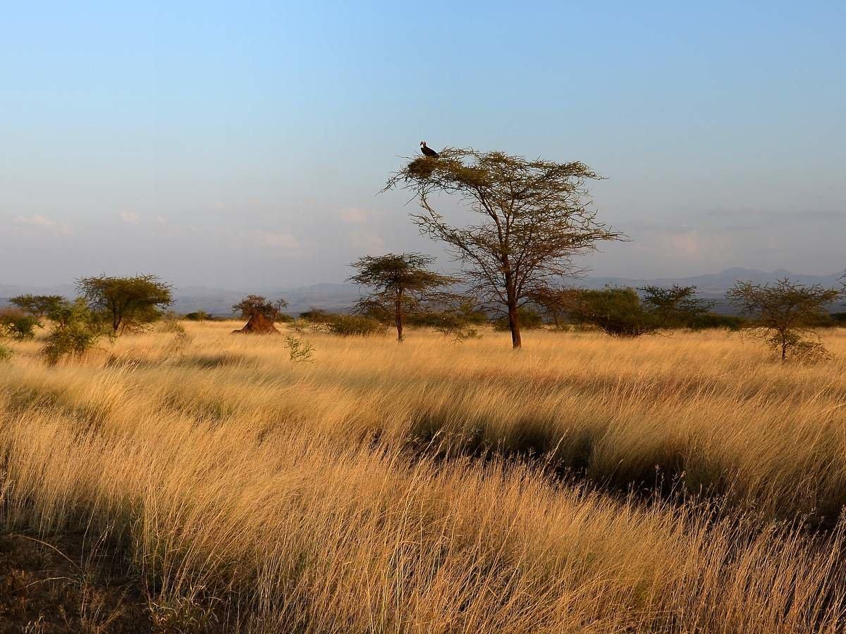 Деласерас африка фото