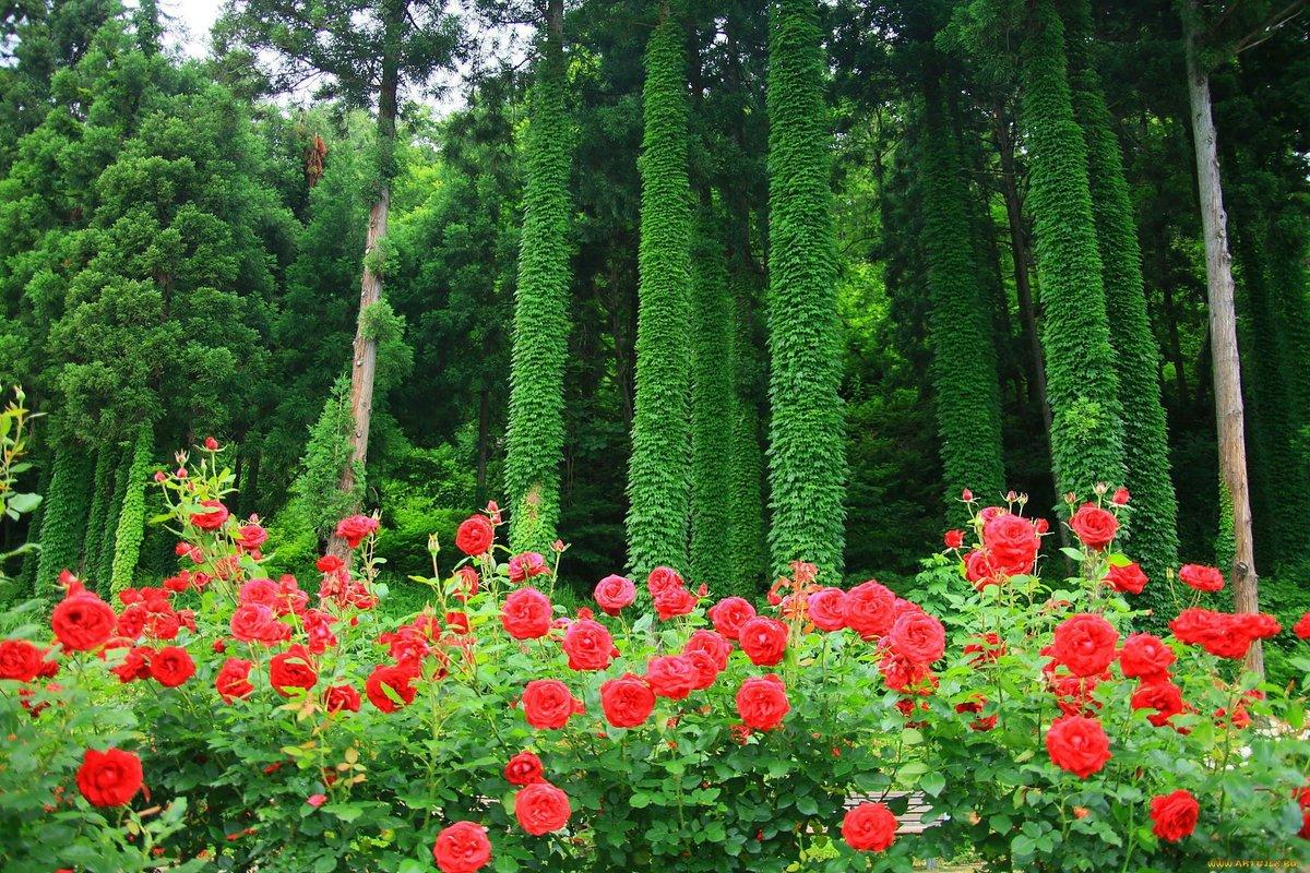 картинки с дикими розами праздник только для