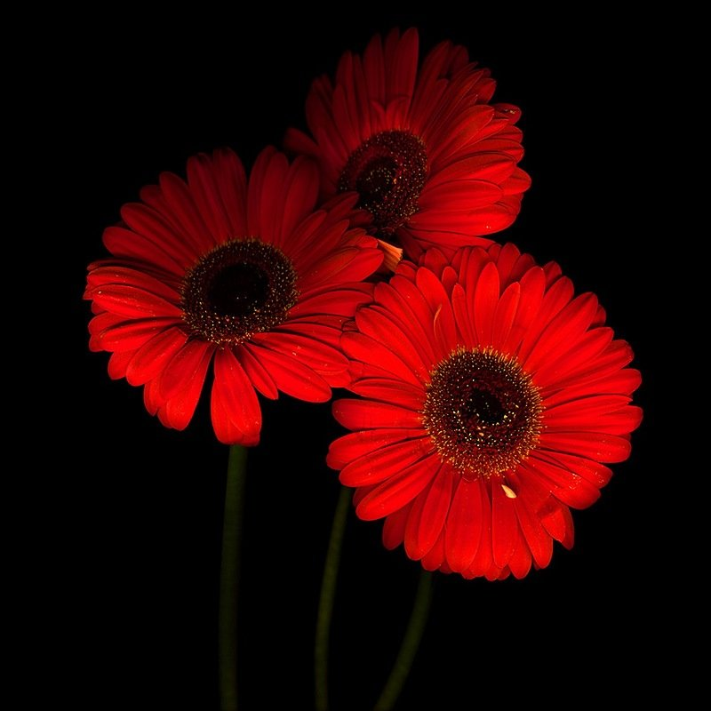 Фото в красно черном цвете
