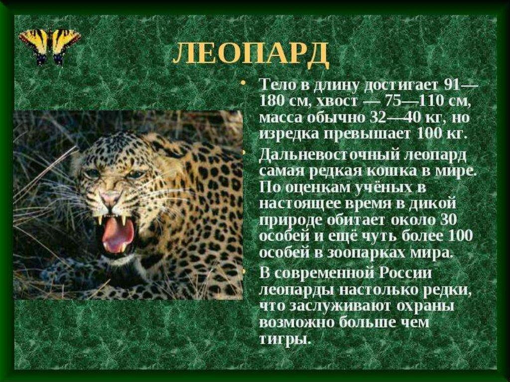 Леопард картинки с текстом