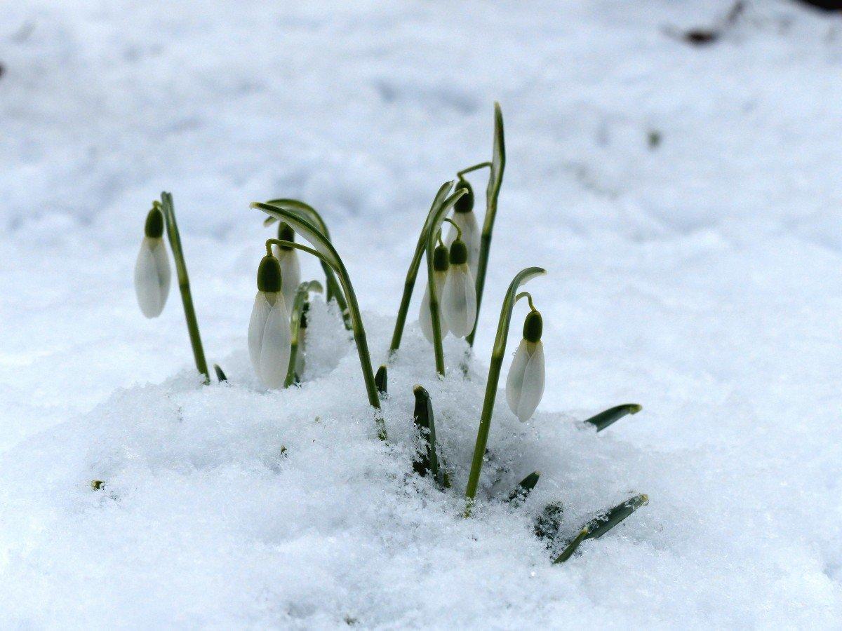 хочу открытка снег весной гораздо лучше, если