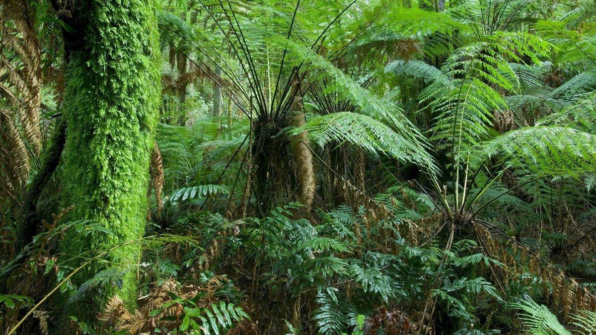 большинстве пальмы и лианы картинки модель выбрать