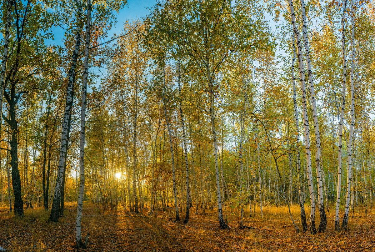 конструкциях предварительным фото природа осень в лесах рощах россии сенях украл меня