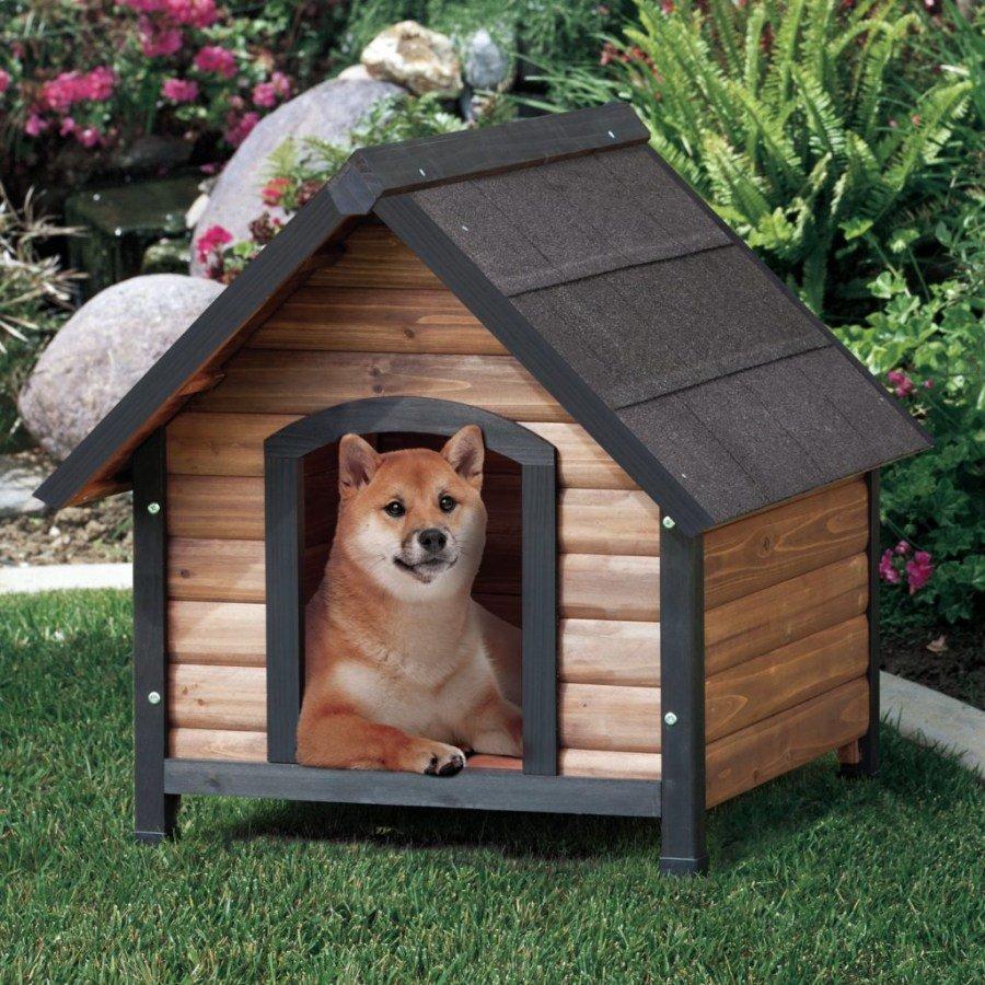 картинка собака и дом внутренней крышке