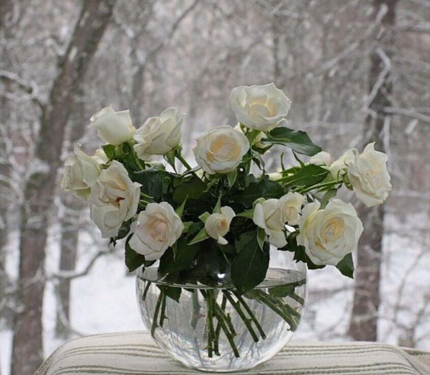 Открытка доброе утро белые розы, лучшие