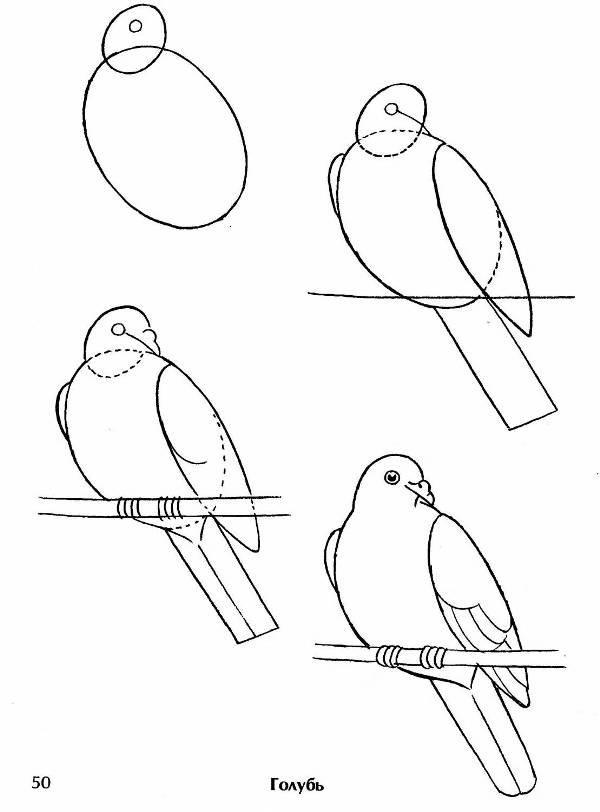 Рисунки животных карандашом поэтапно птицы