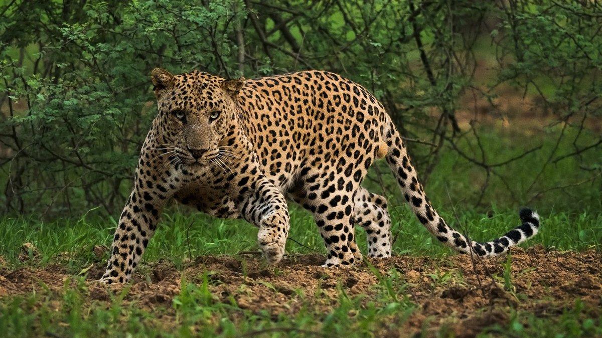картинки индийских животных же, что