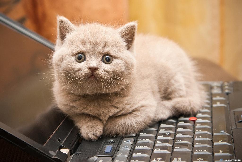 Картинки котят на ноутбук, открытки