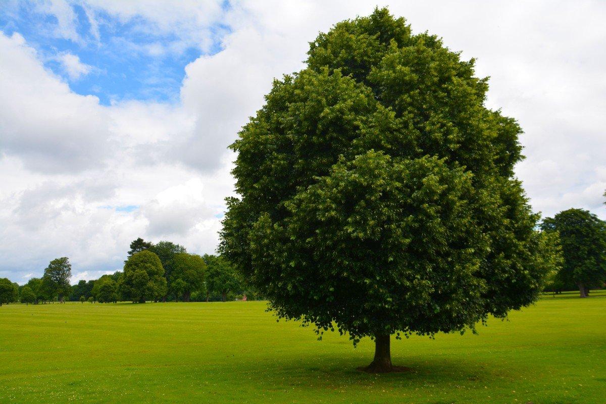 Посмотреть деревья в картинках
