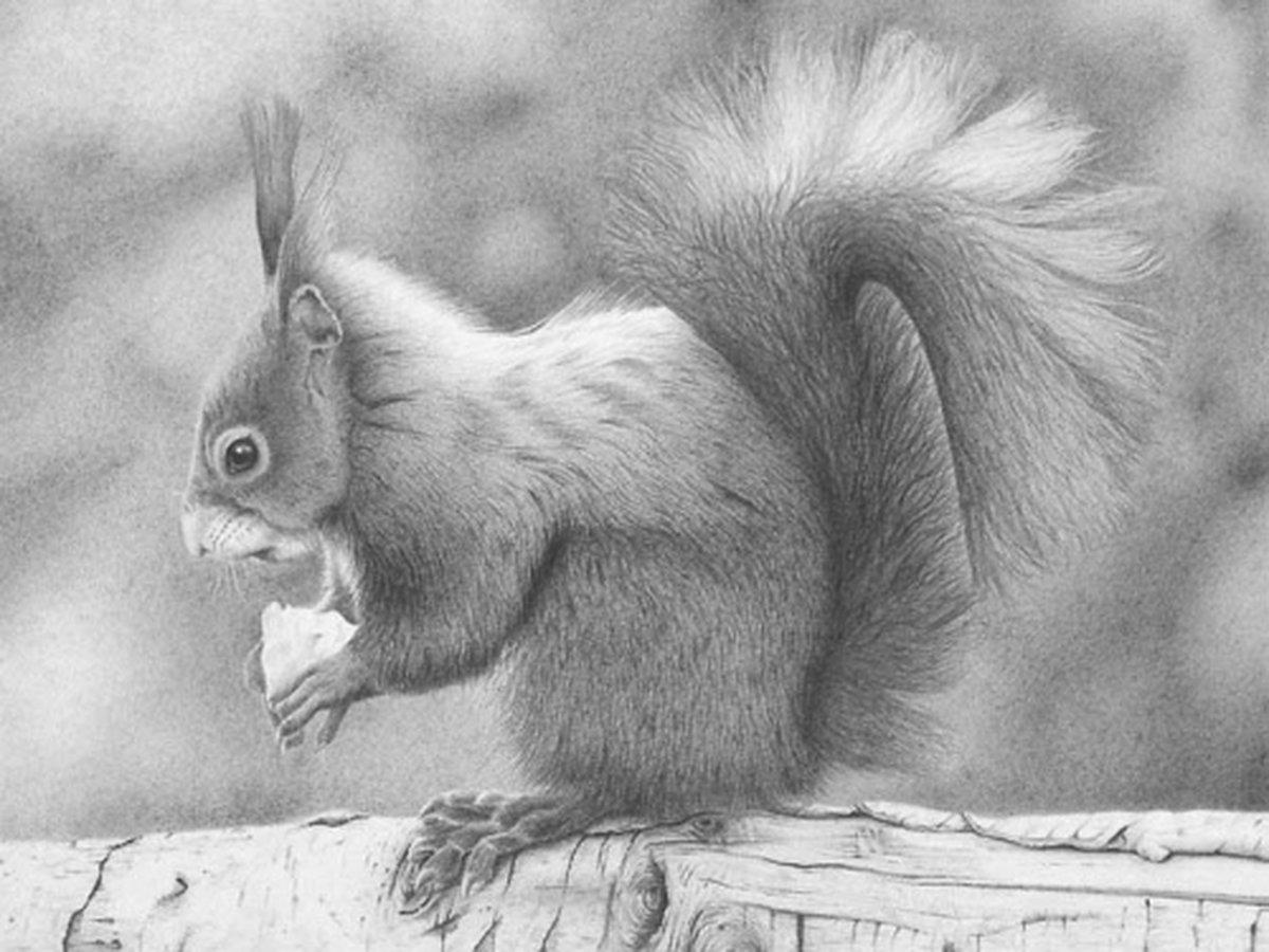 Рисунок животные карандашом, открытка картинки автослесаря