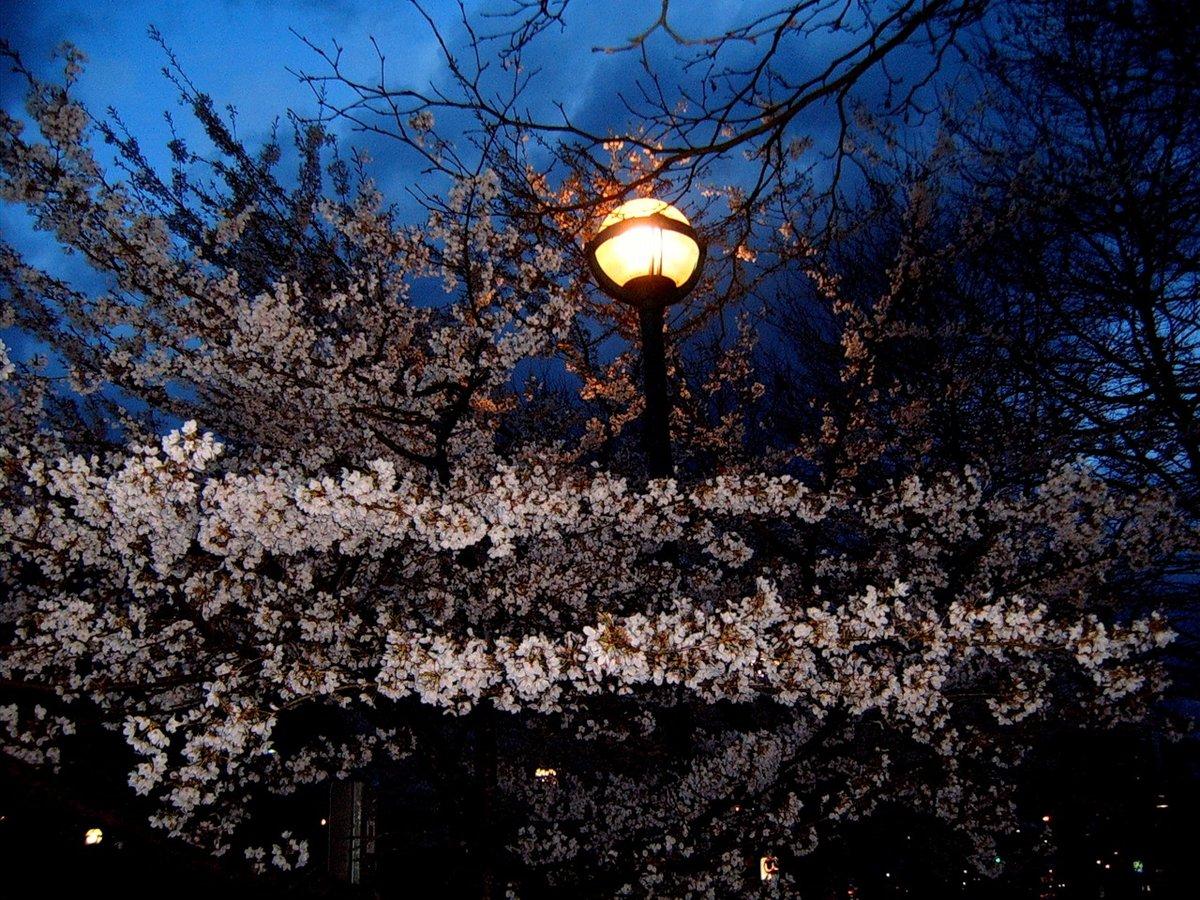 Картинки весна вечером