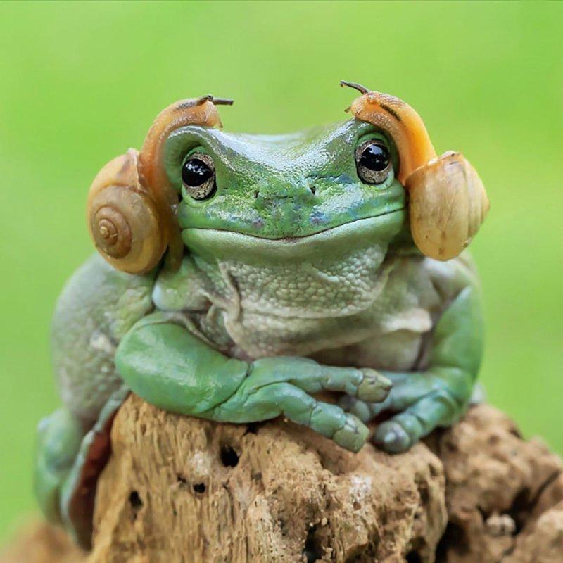 Дочь рождением, картинка прикол жаба