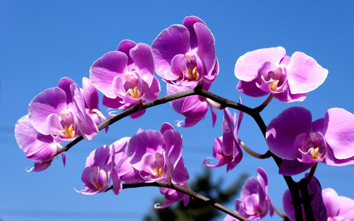 Днем рождения, картинки цветы орхидеи на рабочий стол