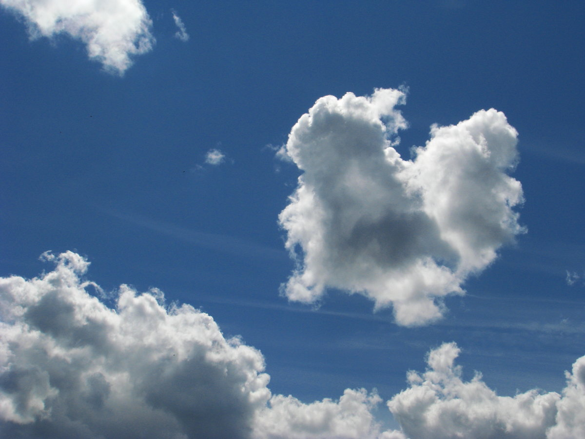 животные похожи на облака картинки расслабить гортань