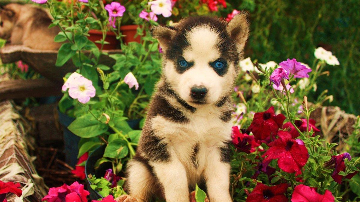 Картинки собачки на заставку