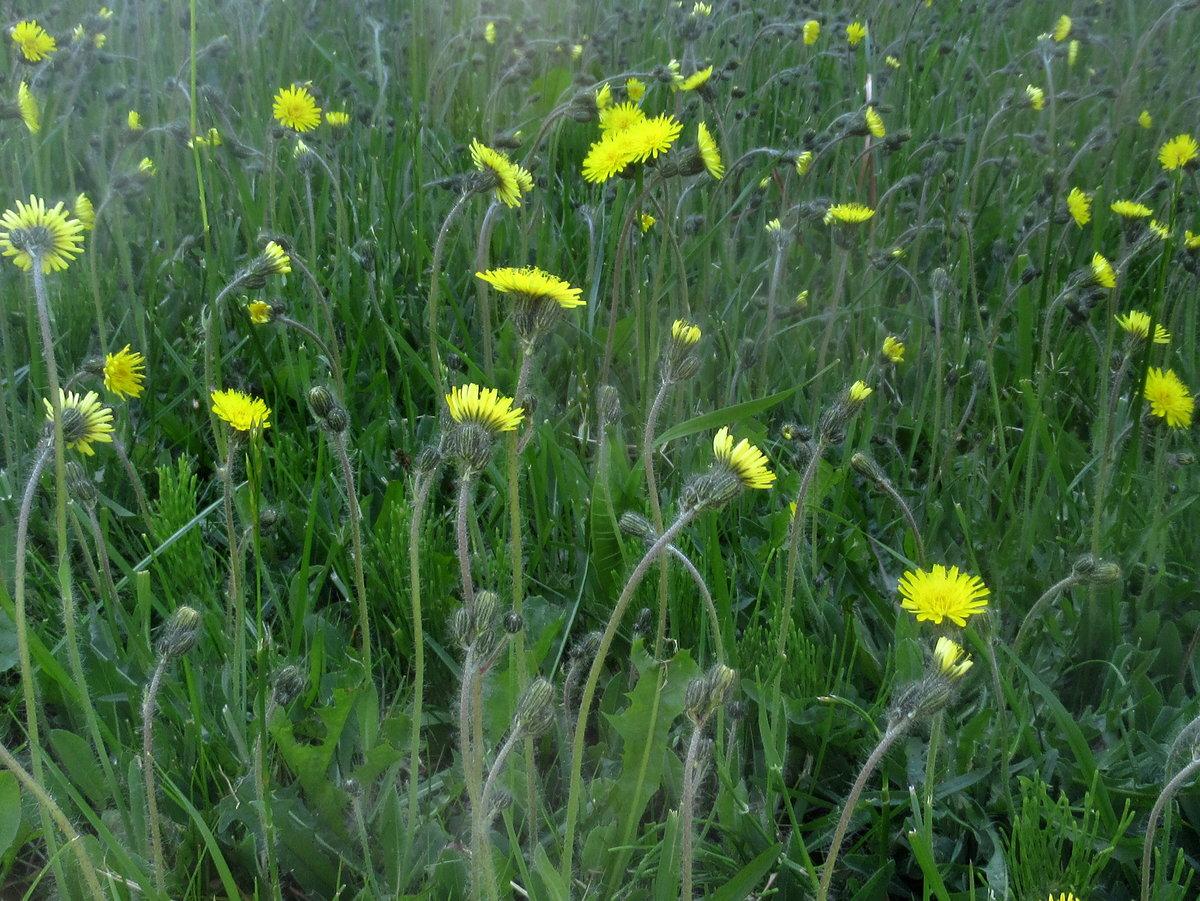 время картинки дикорастущих трав может быть тихой