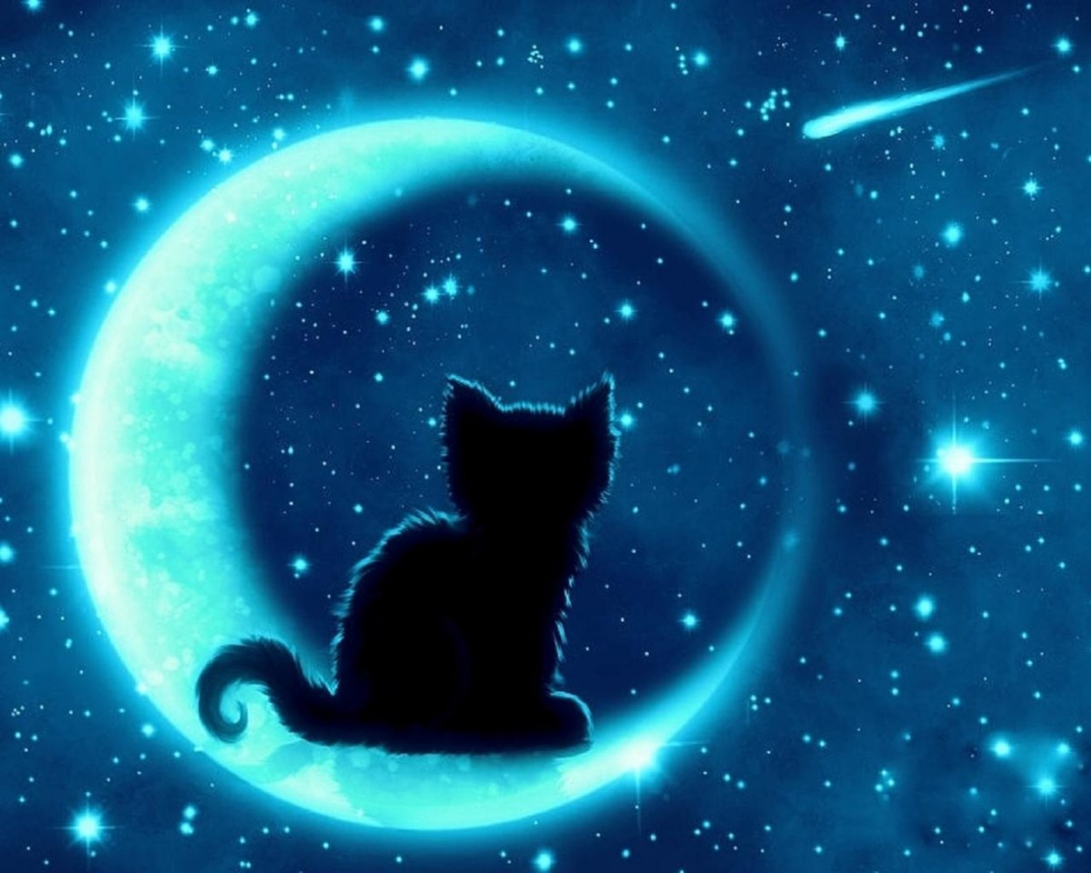 Ночной кот картинка