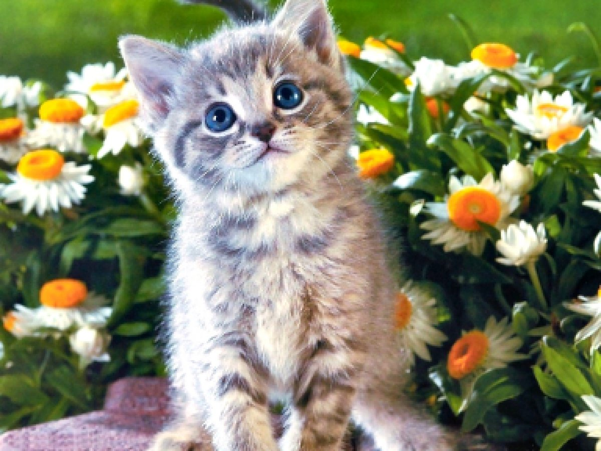 Картинки с котятами красивыми