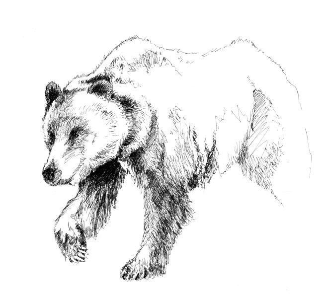 Рисунки картинки медведя, картинку нарисовать