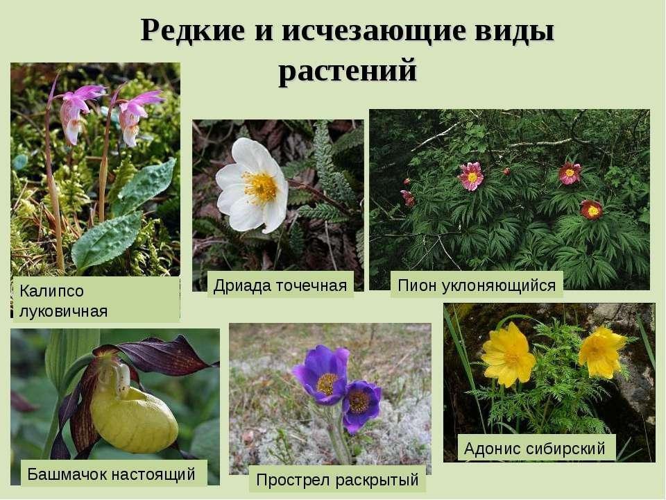 Редкие виды растений и животных картинки