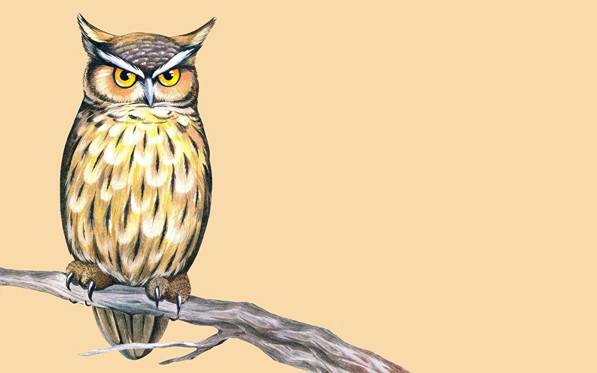 Картинки, картинки с изображением совы рисунки