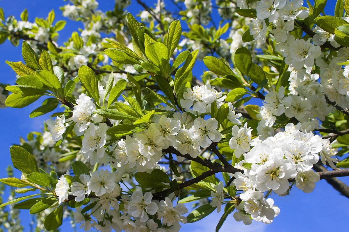 Картинки май весна, месяцем