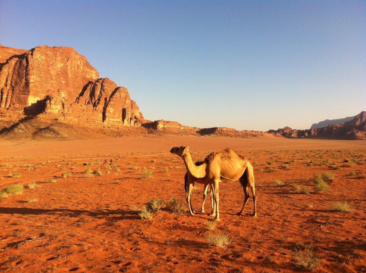 дуб пустыня сахара животный мир картинки учебный год