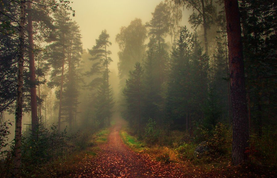 Туман в  финском лесу.