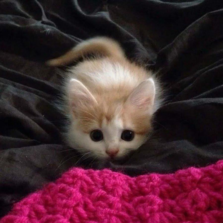 Днем рождения, картинки очень милого котенка