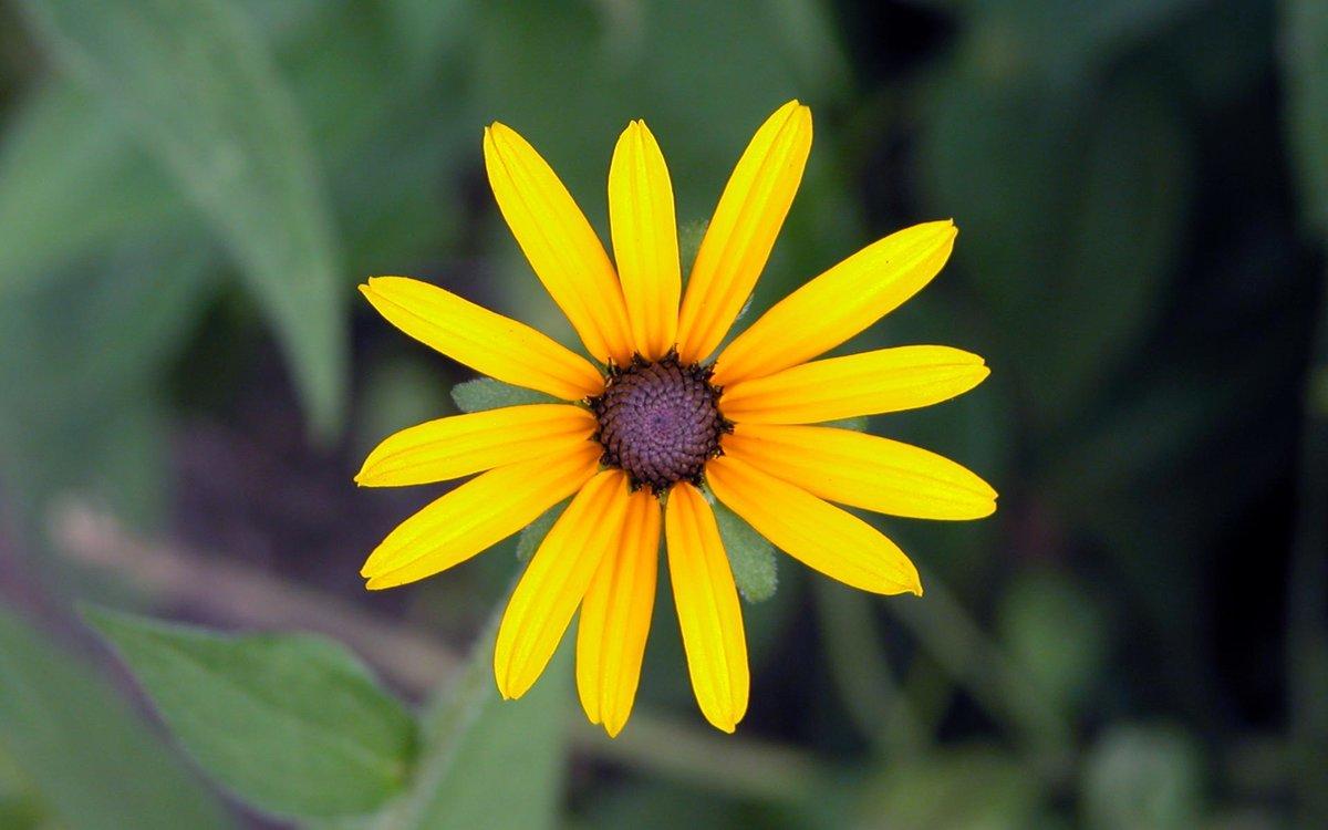 фото цветов маленьких размеров фшр назвал победу