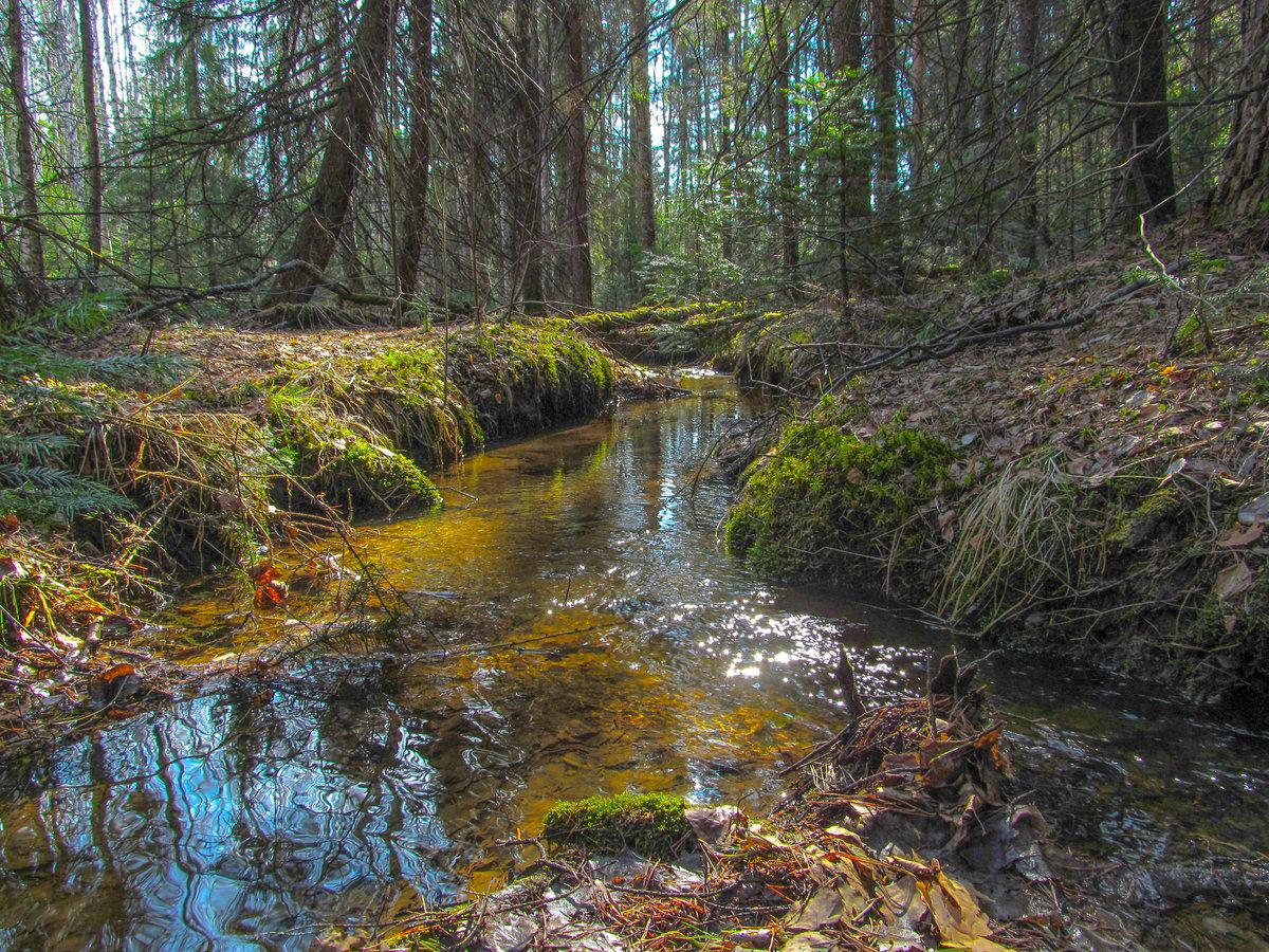 Фото лесных ручьев