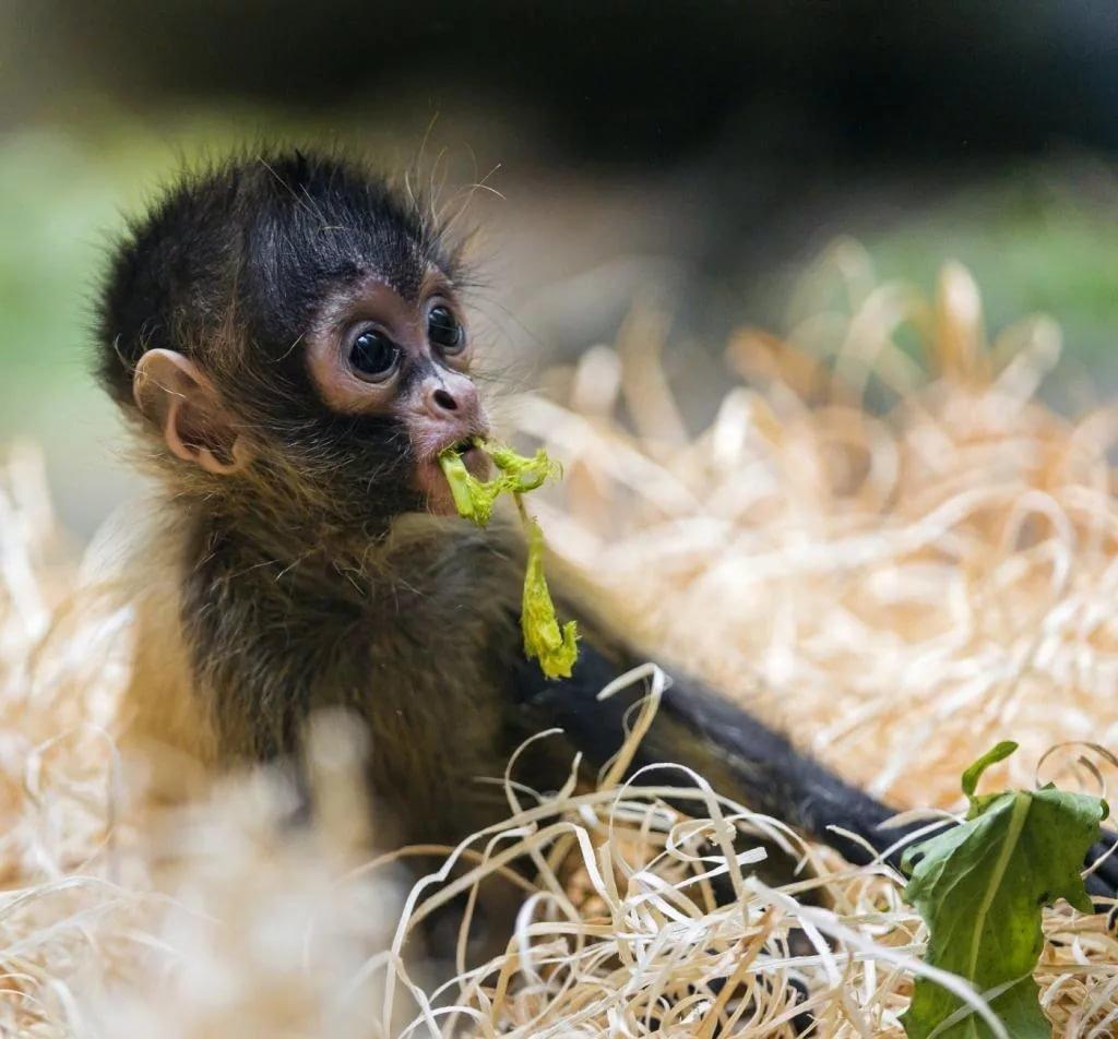 День матери, смотреть смешные картинка с животными
