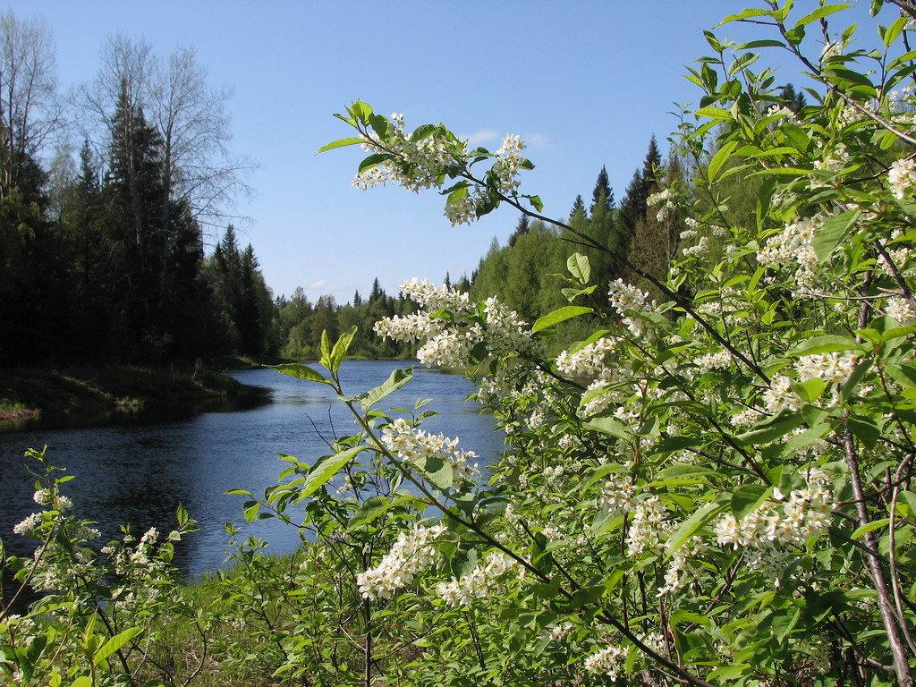 картинки майских дней природа башкортостан сорока