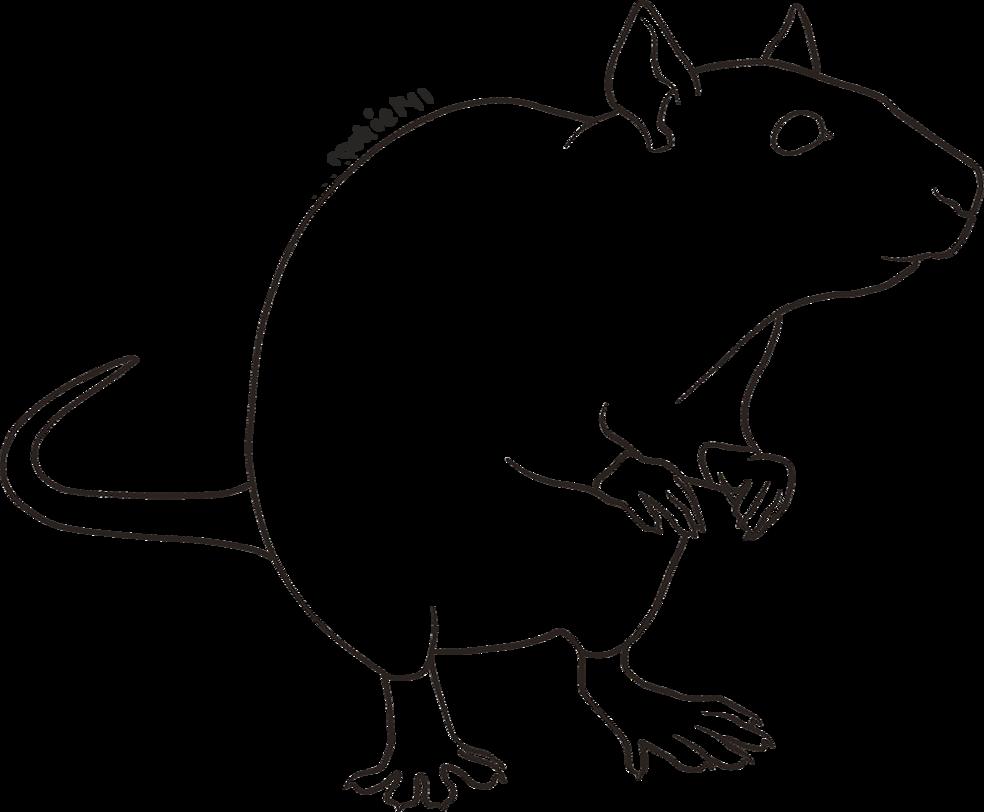 Крыса карандашом картинки