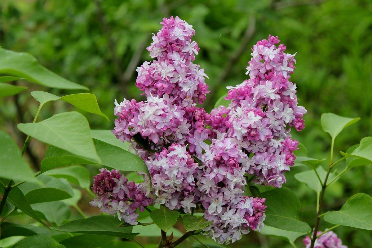 Праздник 1 мая праздник весны и труда поздравления самостоятельно пишет