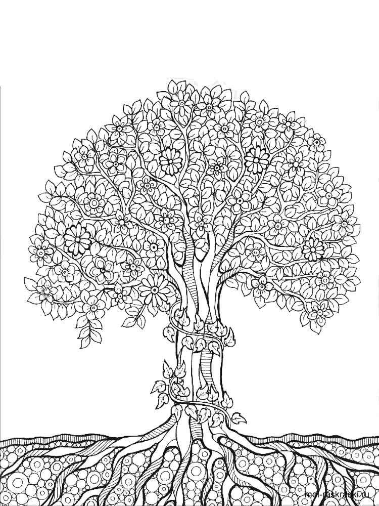 дерево мудрости картинки карандашом