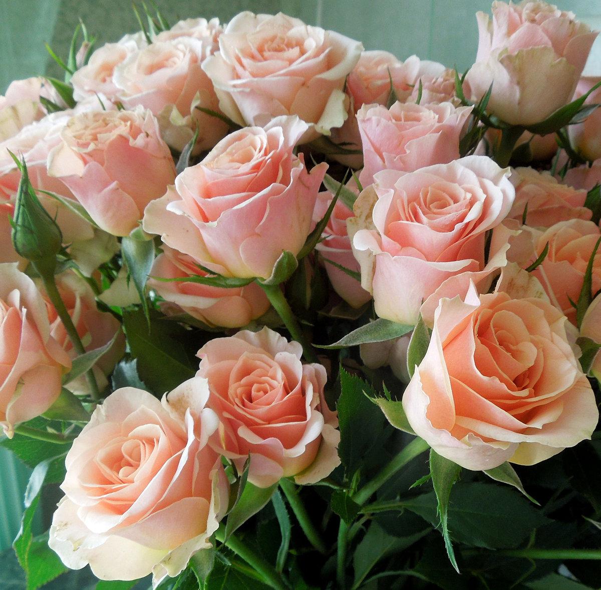 Открытка много цветов с днем рождения женщине, февраля морские прикольные