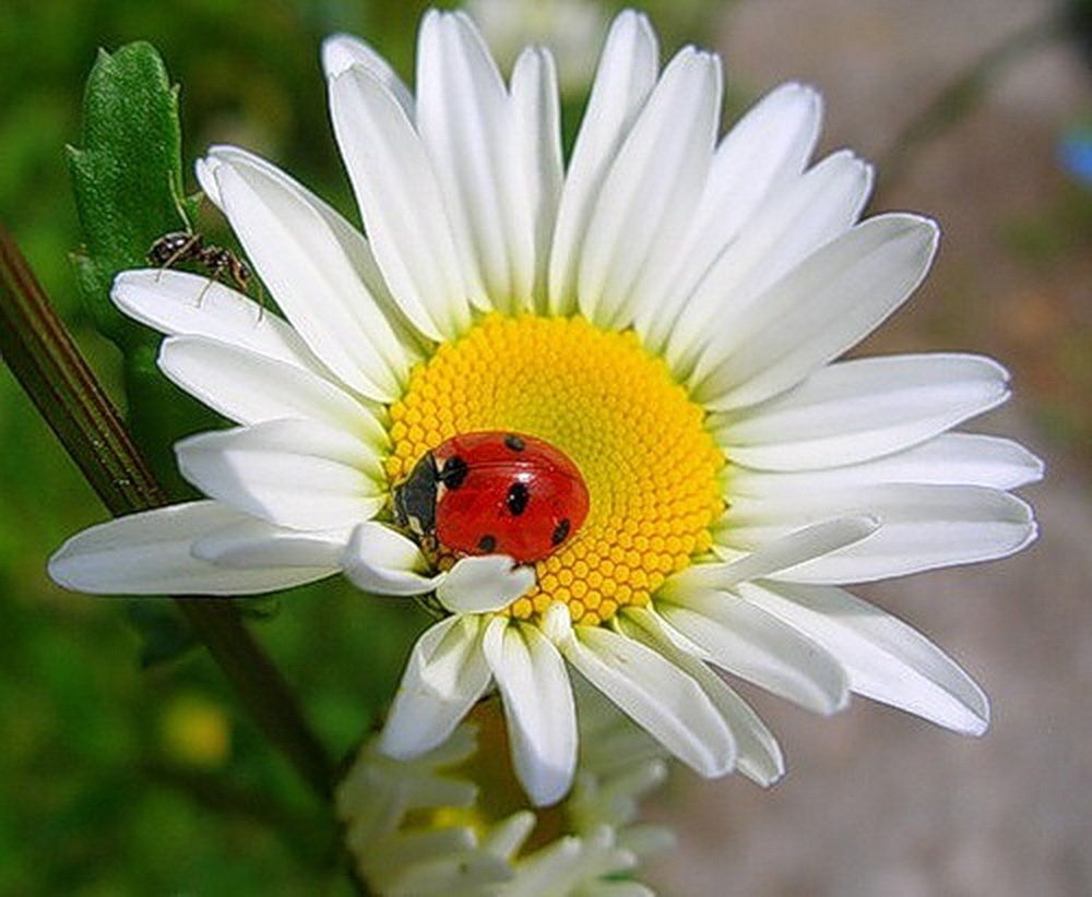 Фотошопом, картинки для аватарки цветы