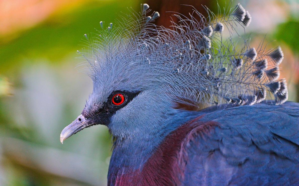 Необычные птицы мира с описанием с картинками