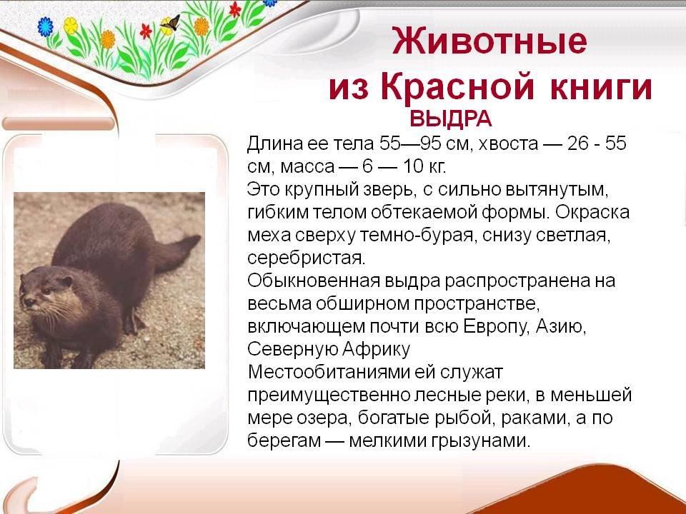 Красная книга картинки животных с описанием
