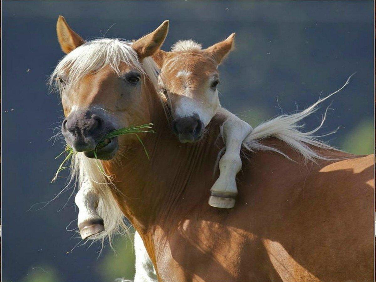 Национальная гвардия, лошади фото красивые картинки с надписями