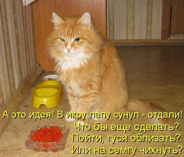 Картинки, ржачные картинки про котов и кошек с надписями