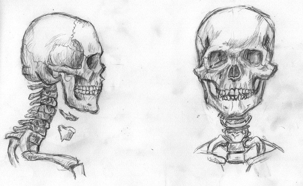 заявила, картинки черепов и скелетов карандашом счастливых