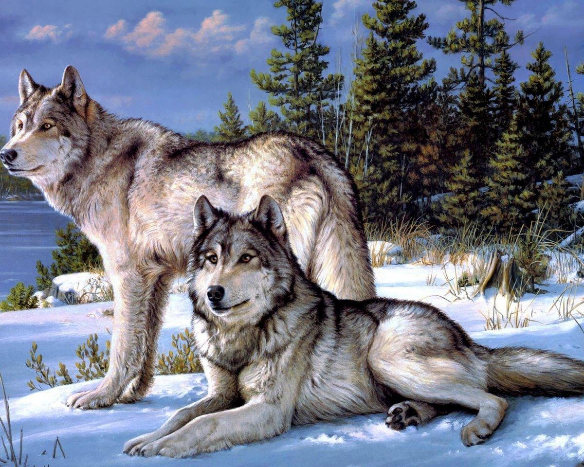 Открытки волков красивые
