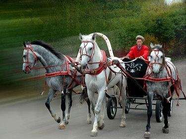фотографии тройки лошадей