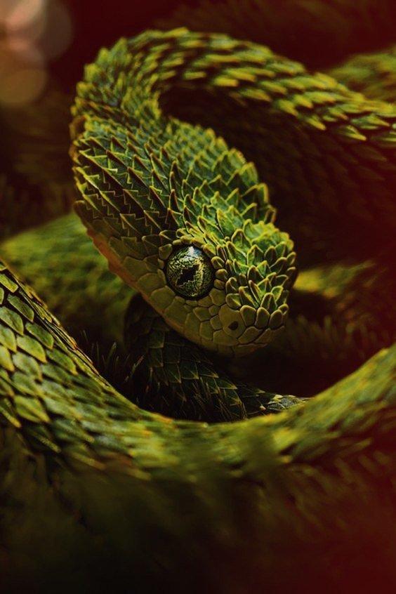 Картинки со змейками, хорошего рабочего дня